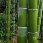 2 Bamboo Stalks